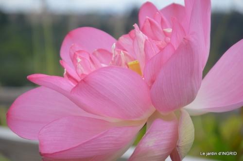 orage,puces,bouquet,Anniv.Ines,Brantome,Jardins d'eau 269.JPG