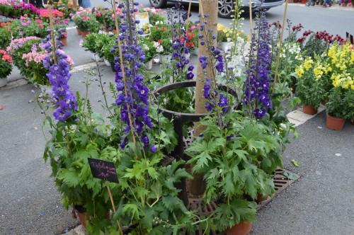 CADOUIN,cascade,iris,roses,fl.sauvages 071.JPG