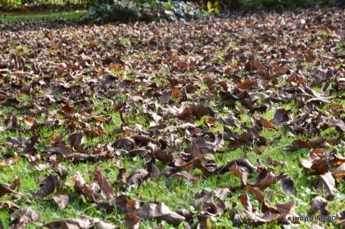 canal,automne,tonte des feuilles 005.JPG