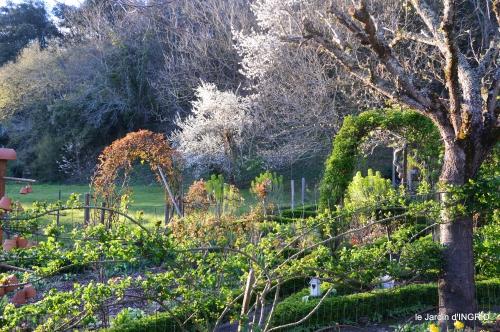 jardin,Ciron,pigeons,magnolia,amélanchier 095.JPG