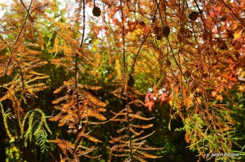 travaux,érable rouge,abeilles,Monpazier,jardin 030.JPG