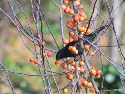 oiseaux,grotte du coulobre 098.JPG
