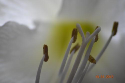 mesanges à longues queues,orchidées,neige2013 022.JPG