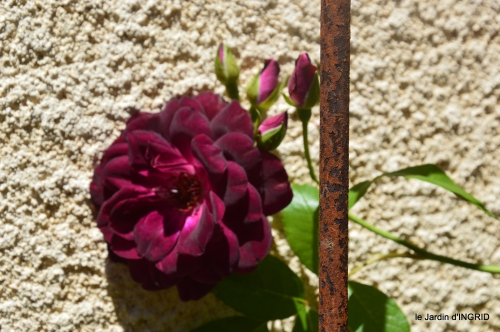 le jardin de Frescati,roses 057.JPG