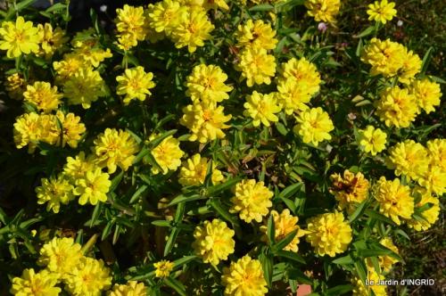jardin Mme Perichou,grandes fleurs,bouquet,jardin 017.JPG