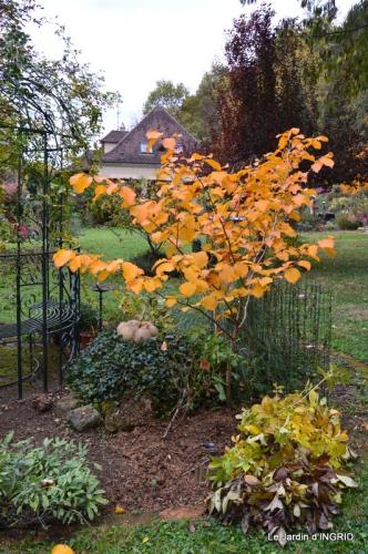 les arbres en automne,cabane 043.JPG