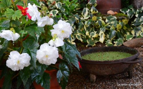 jardin ,chez Fabien,automne 105.JPG