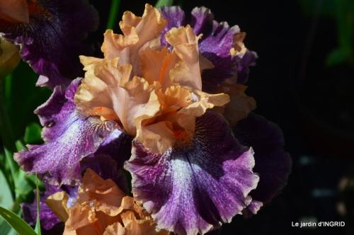 muguet,féte des fleurs Lalinde,jardin 084.JPG