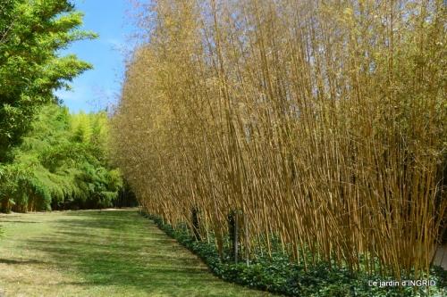 bambous Roque Gageac,jardin,bouquet 134.JPG