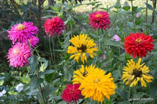 jardin Mme Perichou,grandes fleurs,bouquet,jardin 001.JPG