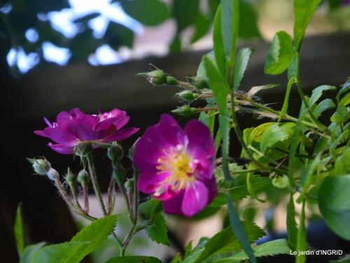jardin,st Astier,colline 141.JPG
