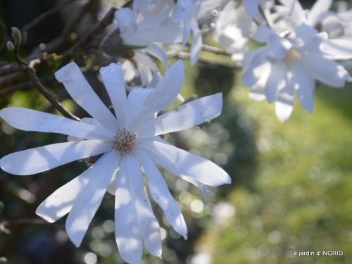 Romane,arbre de Paques,chez Bernadette,jardin 051.JPG