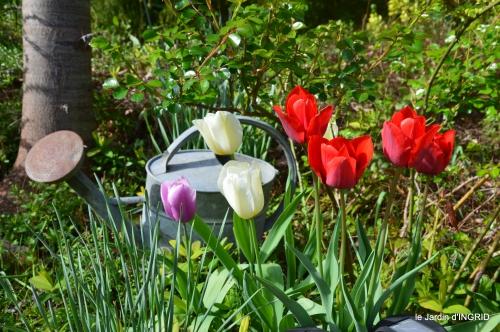 première roses,achats,jardin blanc 039.JPG
