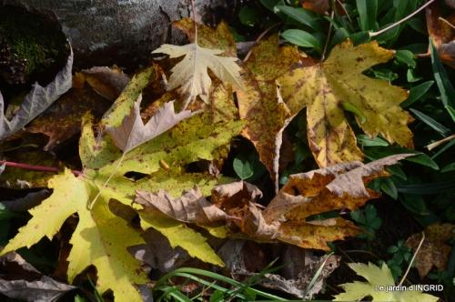 canal,automne,tonte des feuilles 007.JPG