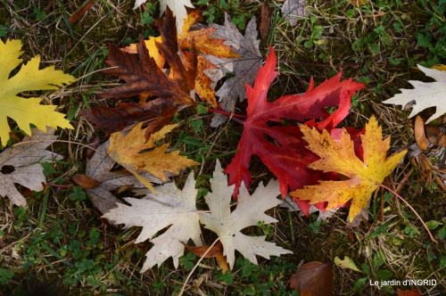 les arbres en automne,cabane 077.JPG