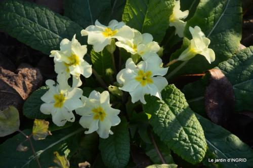 fleurs de janvier ,coucher de soleil,compo de tulipes 037.JPG