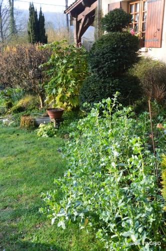 saumon,paquerettes,jardin blanc 052.JPG