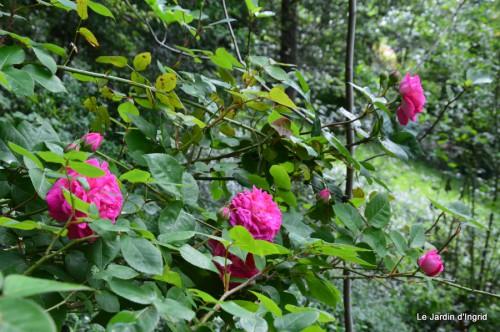 jardin,roses,cabane 024.JPG