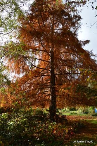 travaux,érable rouge,abeilles,Monpazier,jardin 032.JPG