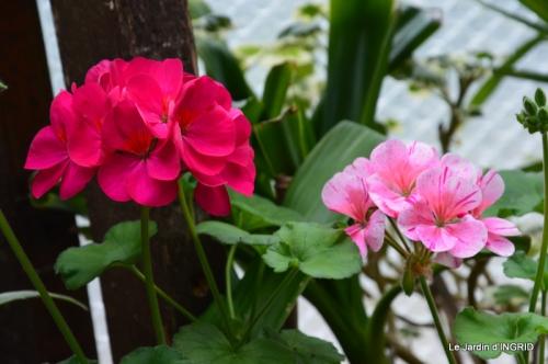 jardin (3 semaine de mars) 044.JPG