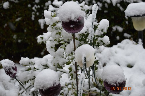 mesanges à longues queues,orchidées,neige2013 111.JPG