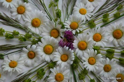 fleurs Beaumont,bouquet,tableau,serre,plants 045.JPG