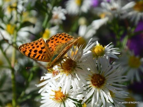 papillons,couleurs d'automne,Bernadette,pluie 059.JPG