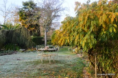 composition,kakis,jardin givré,asclépias,lalinde 060.JPG