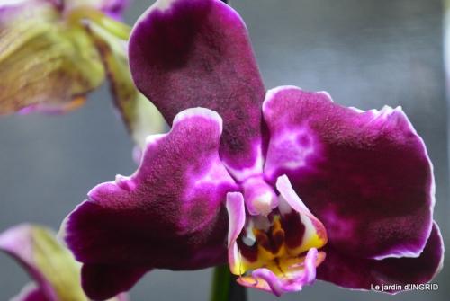 Orchidées,Noel jardiland,lever du soleil 022.JPG