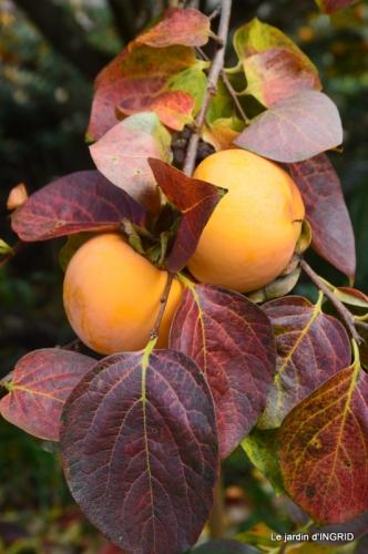 feuillages d'automne et tonte de la pelouse 063.JPG