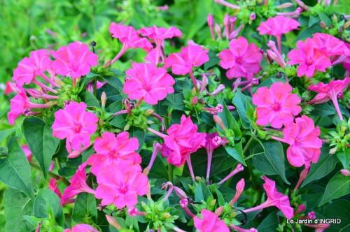 jardin ,bord de la Dordogne,cygnes 049.JPG