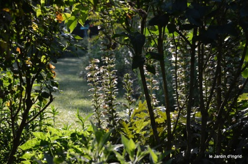 jardin matin,Romane ,nicky 009.JPG