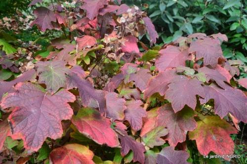 feuillages d'automne et tonte de la pelouse 076.JPG