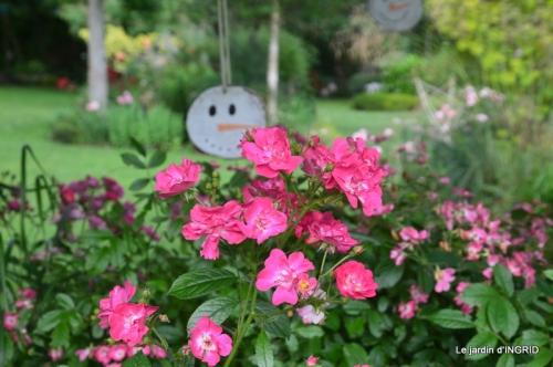 mon jardin,dégats buis, 111.JPG