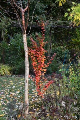 jardin serre bucher automne 022.JPG