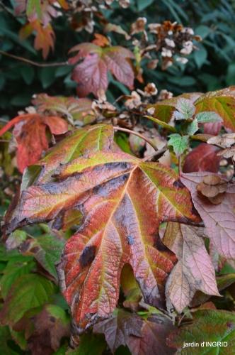 couleurs d'automne,bouquet,lune 019.JPG