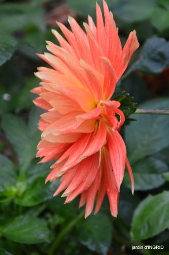 couleurs d'automne,bouquet,lune 026.JPG