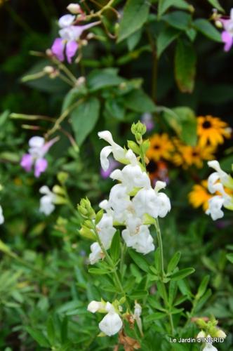 jardin ,bouquet 034.JPG