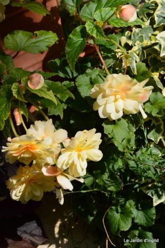 automne jardin,la rue,abeilles,les p filles 058.JPG