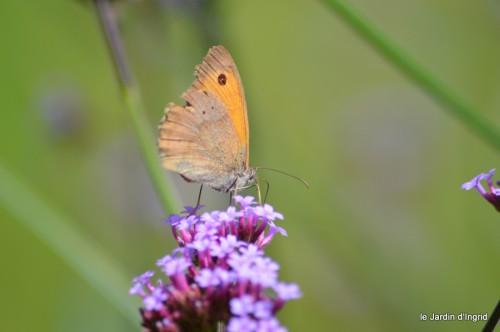 coeur des fleurs,papillons,libellules 122.JPG