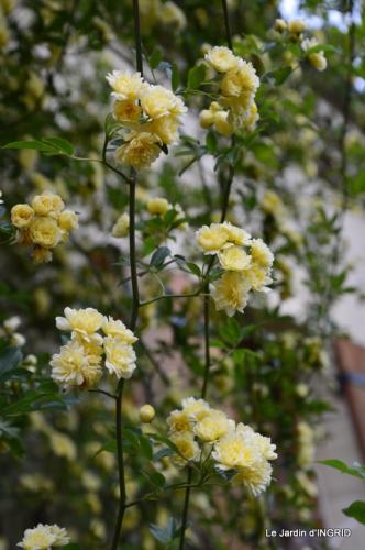 jardin avril 050.JPG