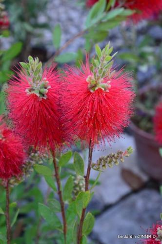 Cadouin,ancolies,roses,pollen,osier,photos Fabien,coquelicots 002.JPG