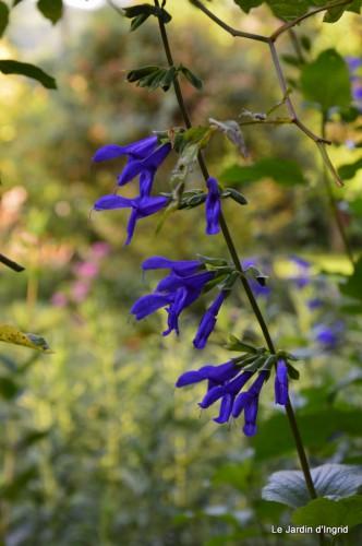 fleurs bleues,hortensia bleu,moi bébé 008.JPG