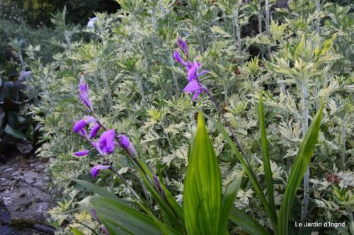 Ciron,pivoine,escargot,jardin,ancolie,glycine 209.JPG