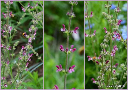 2015-05-24 Roses du jardin,soirée Monpazier,puces Eymet.jpg