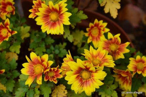 travaux,érable rouge,abeilles,Monpazier,jardin 056.JPG