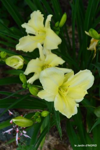jardin,chez Bernadette,puces,cygnes,pluie 118.JPG