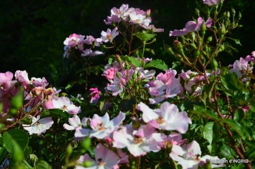 jachère,couleur,bouquet 006.JPG