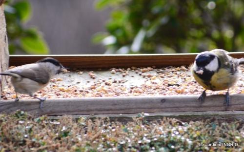 les oiseaux,les poules d'eau 083.JPG