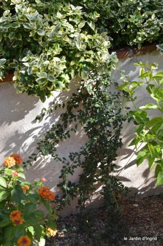 jardin,à l'étage,Joel dans bucher 010.JPG